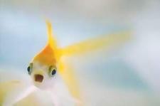 Nice Fishy