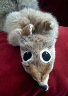 Some Taxidermists are better than others.