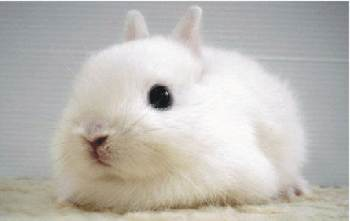 Ickle wabbits - cute, tasty and in danger!