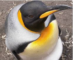 You talkin' to me? You talkin' to me, Linux boy?