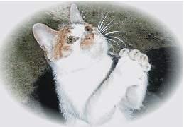 Kitty prays for mercy. Bad kitty.